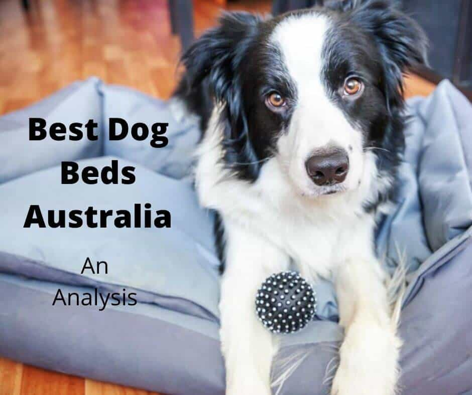 Best Dog Beds Australia