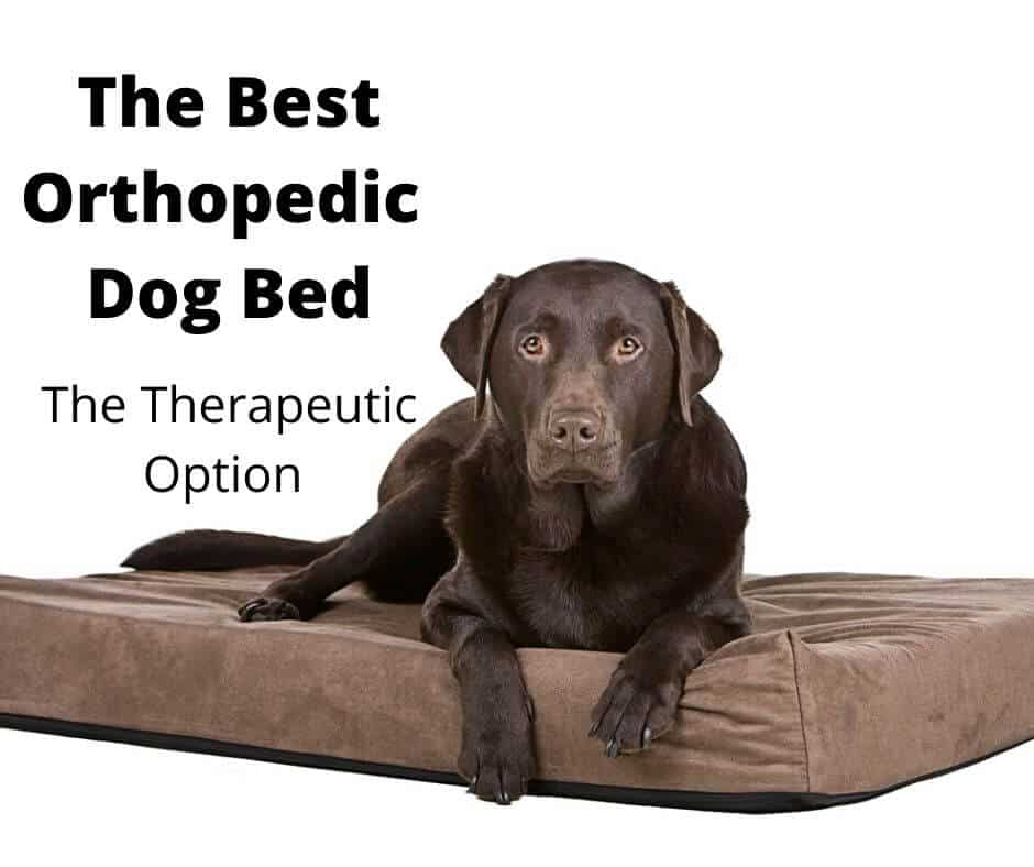 Best Orthopedic Dog Bed Australia