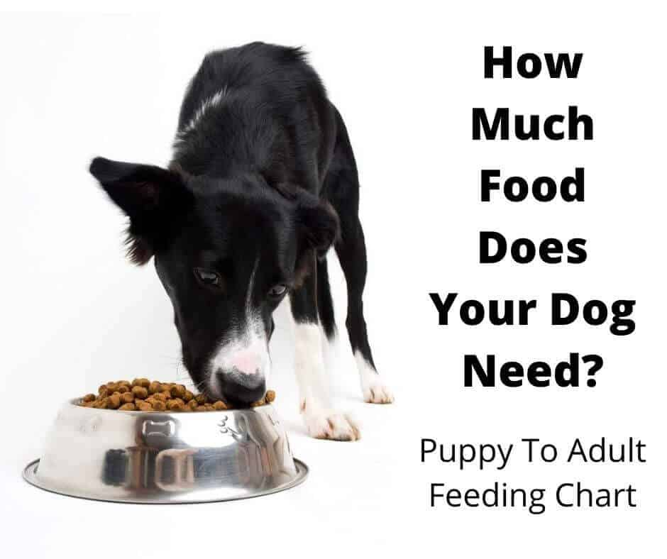 How Much Food to Feed A Dog