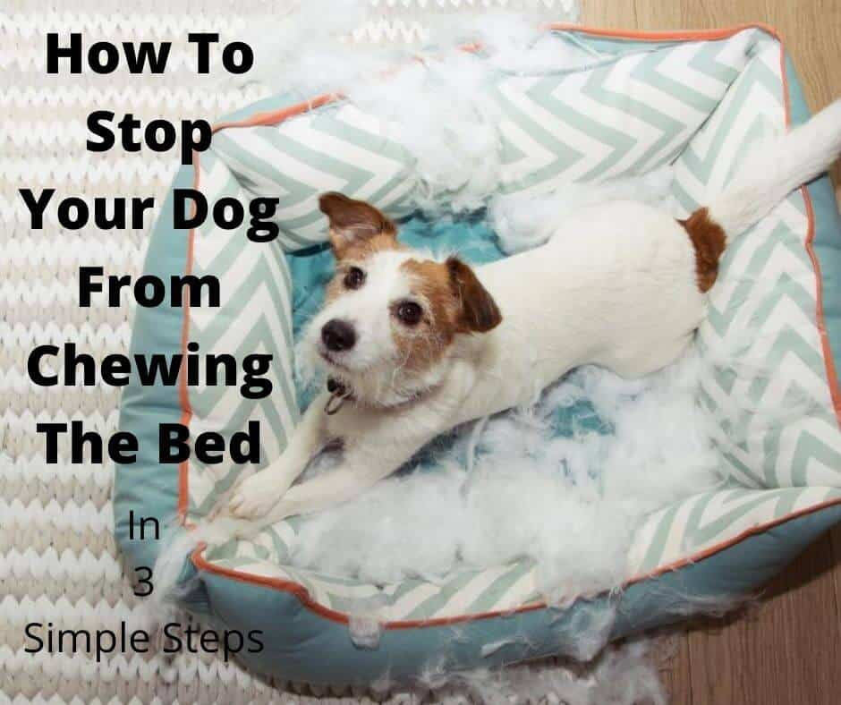 How To Stop A Dog From Chewing The Bed