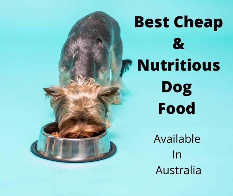 Best Cheap Dog Food Australia