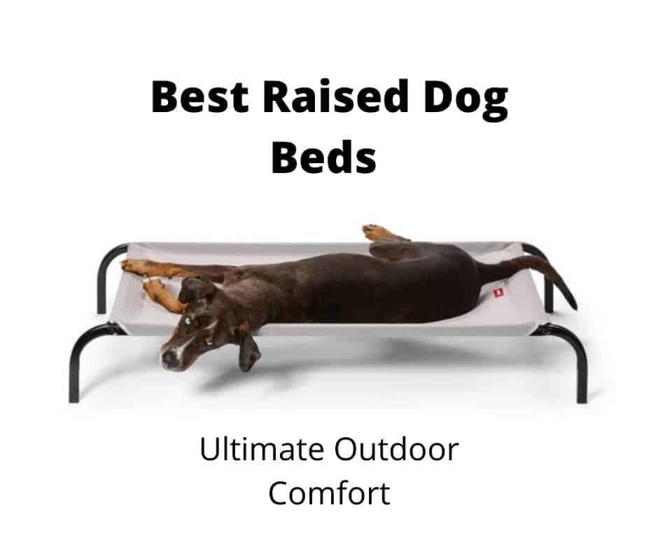 Best Raised Dog Bed Australia