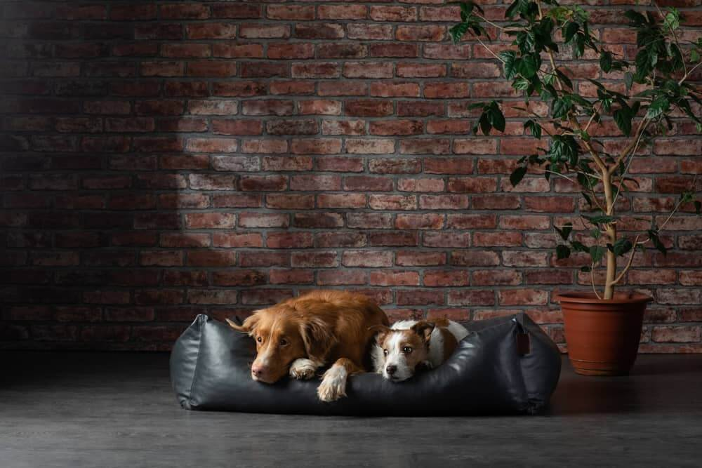 Two dogs sleeping on the same dog bed