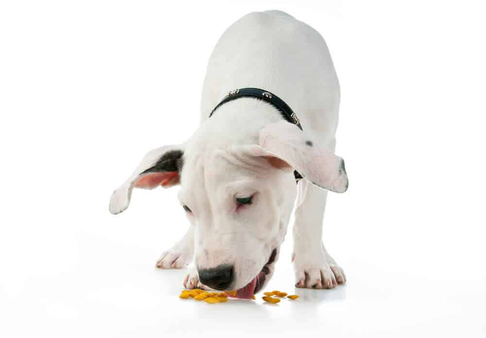 cute puppy eating