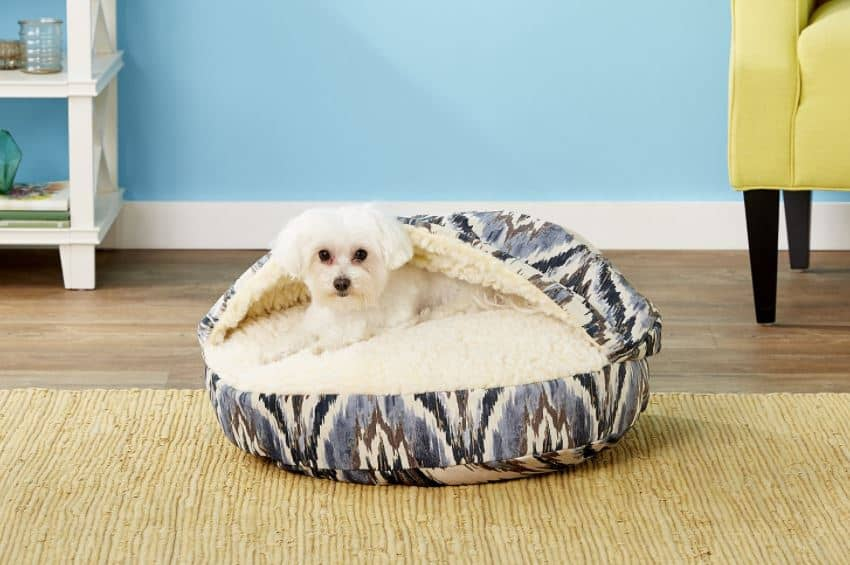 poodle in a cave bed