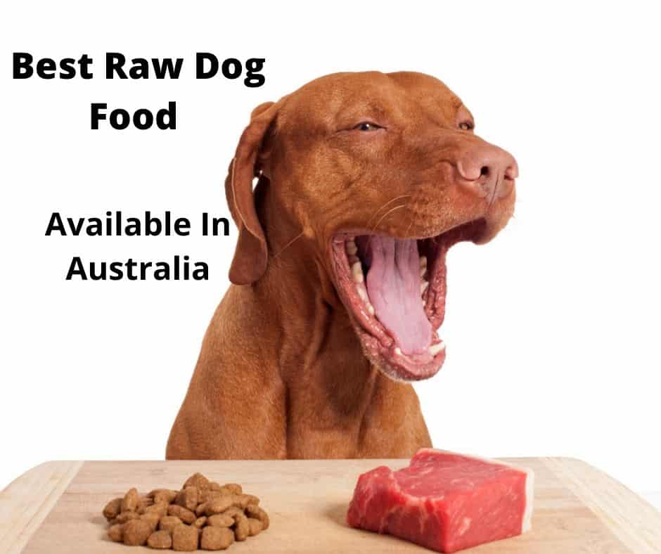 dog about to eat raw food