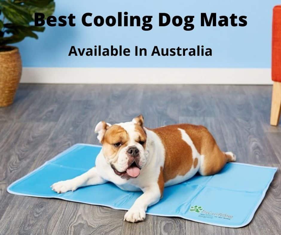 Bulldog laying on a cooling dog mat