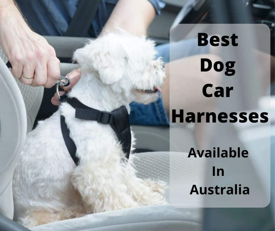 dog using a car harness