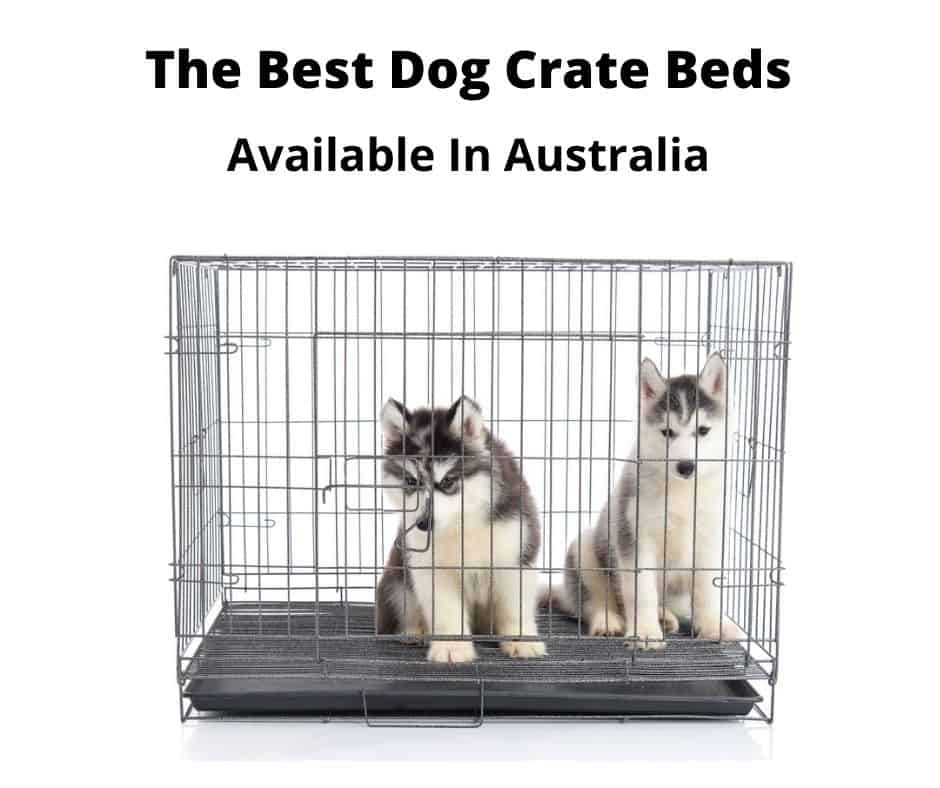 Husky puppies in a dog crate with bed