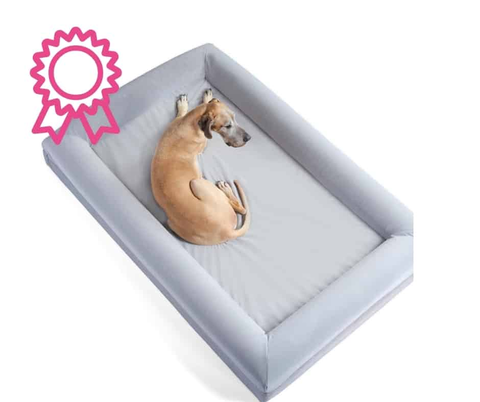 Great Dane in a dog bed