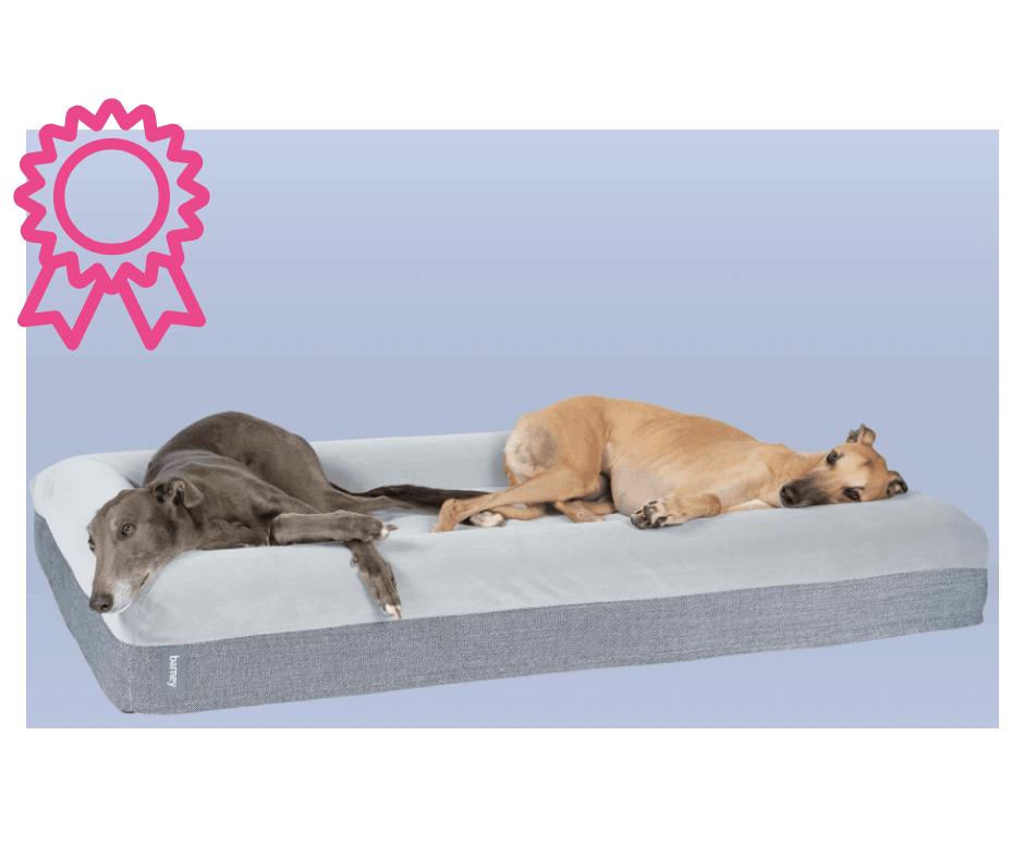 Greyhounds laying in Barney Bed