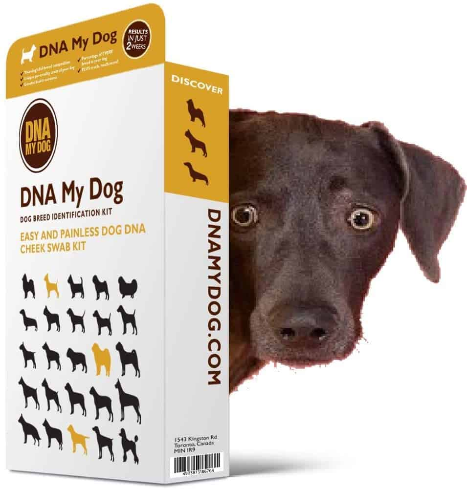 DNA My Dog Canine Breed Identification Test Kit