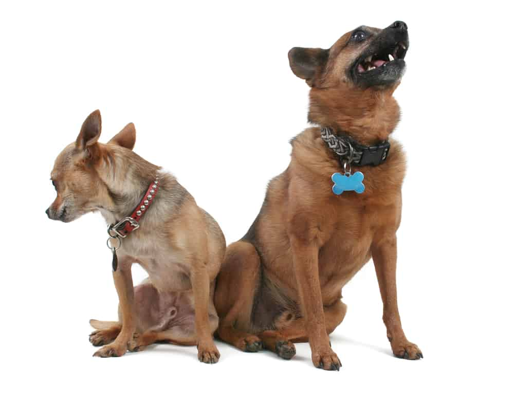 dogs wearing their martingale collar