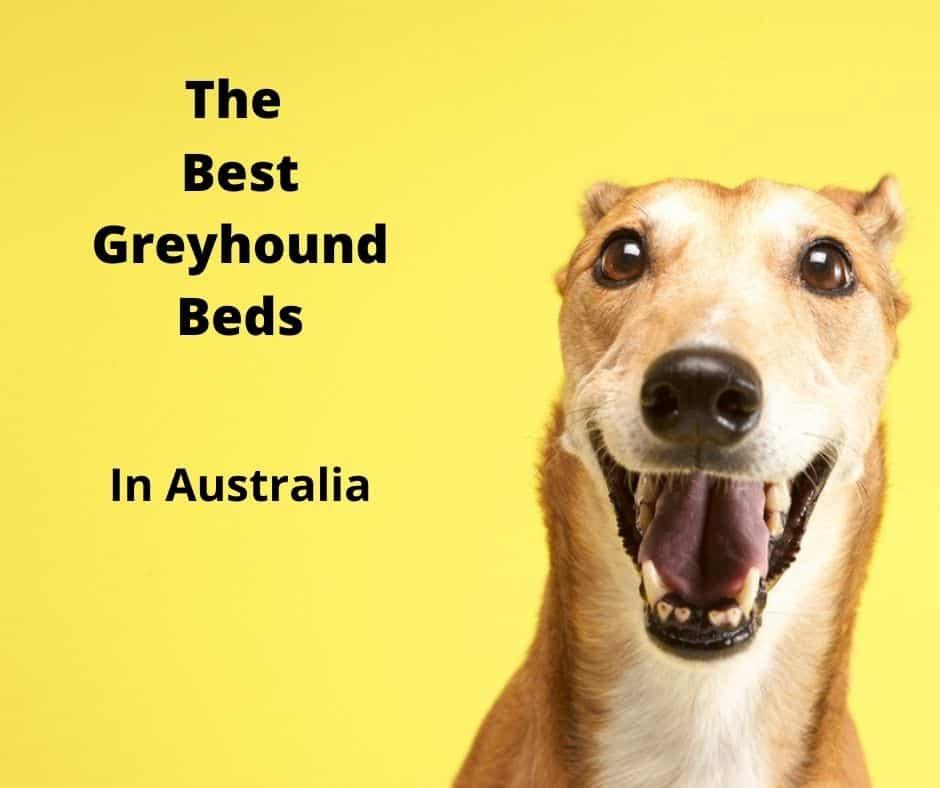 greyhound bed
