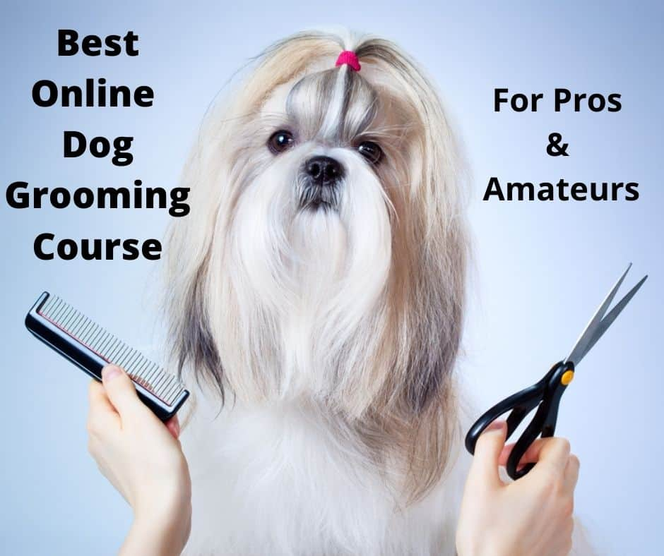 Online dog grooming course