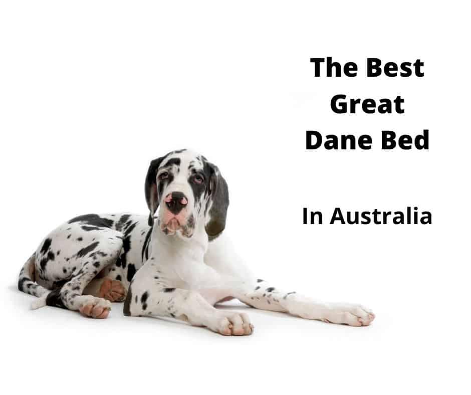 Great Dane Beds
