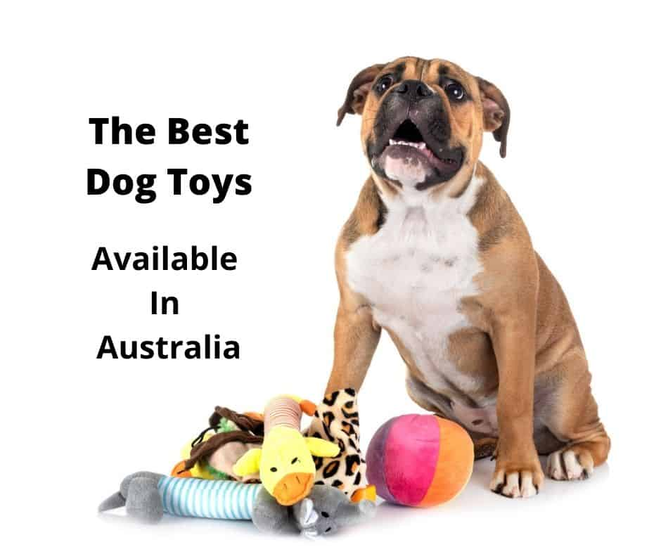 The best dog toys Australia