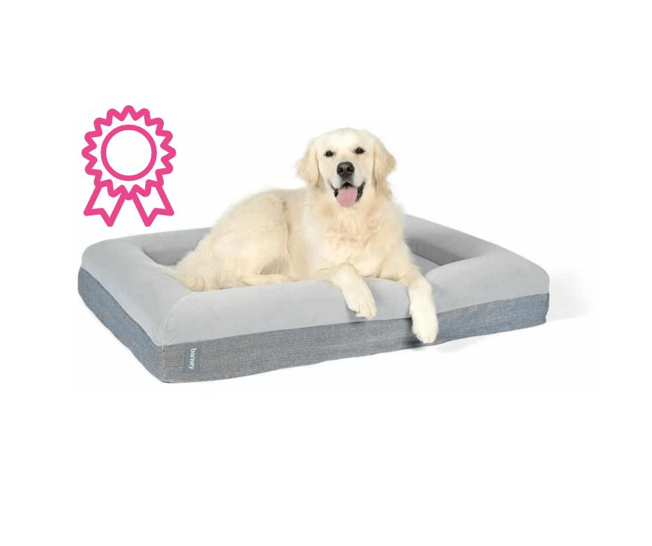 Labrador in a barney dog bed