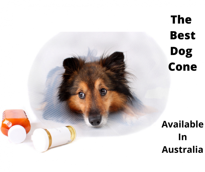 dog wearing a cone of shame