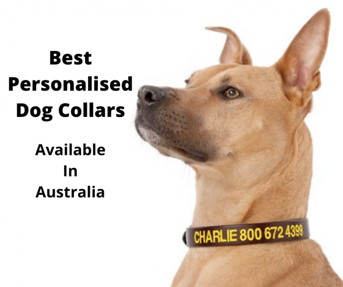 dog wearing a personalised dog collar