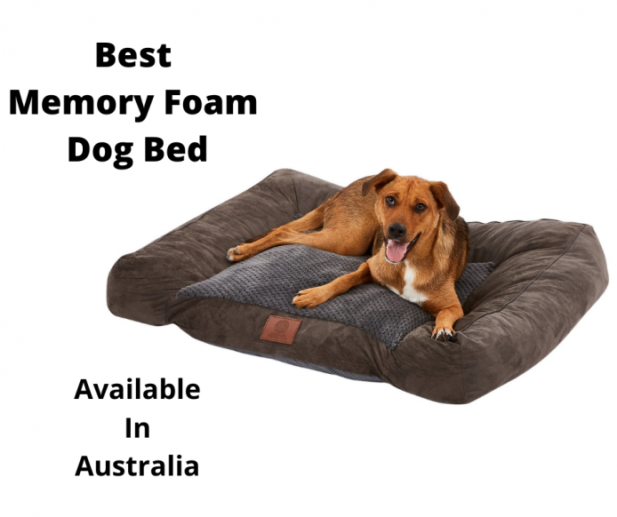 dog resting in a memory foam dog bed