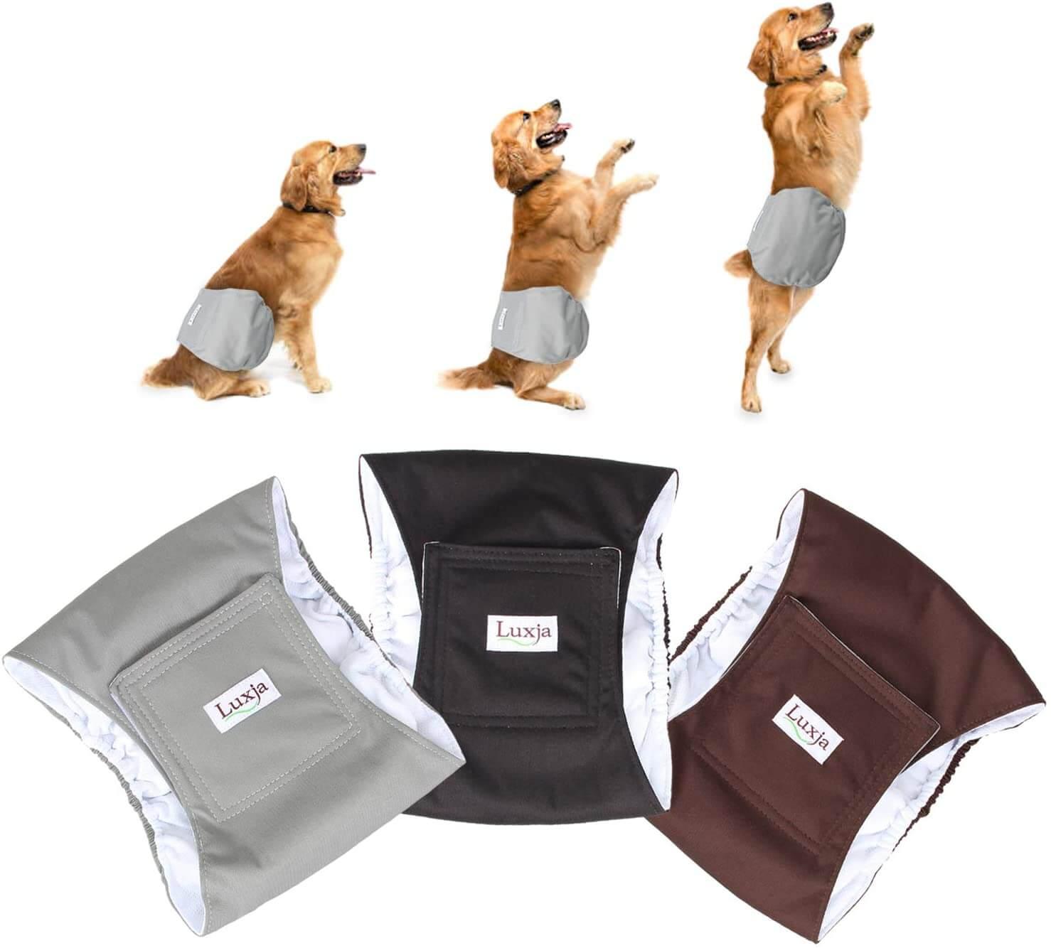 nextech dogs - aktifqq.cc