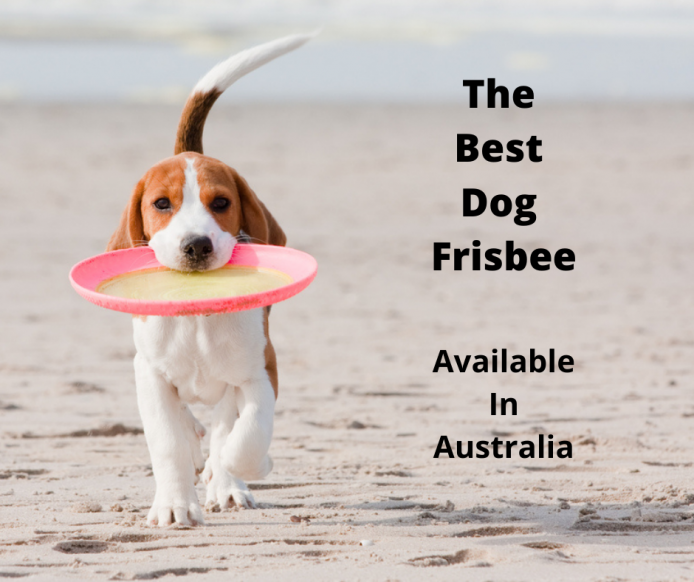 Beagle playing with a dog frisbee at the beach