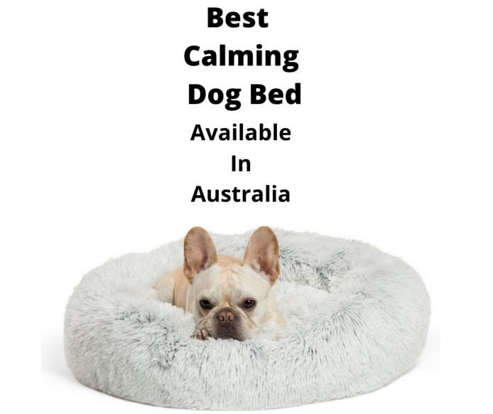French Bulldog In a Calming Dog Bed