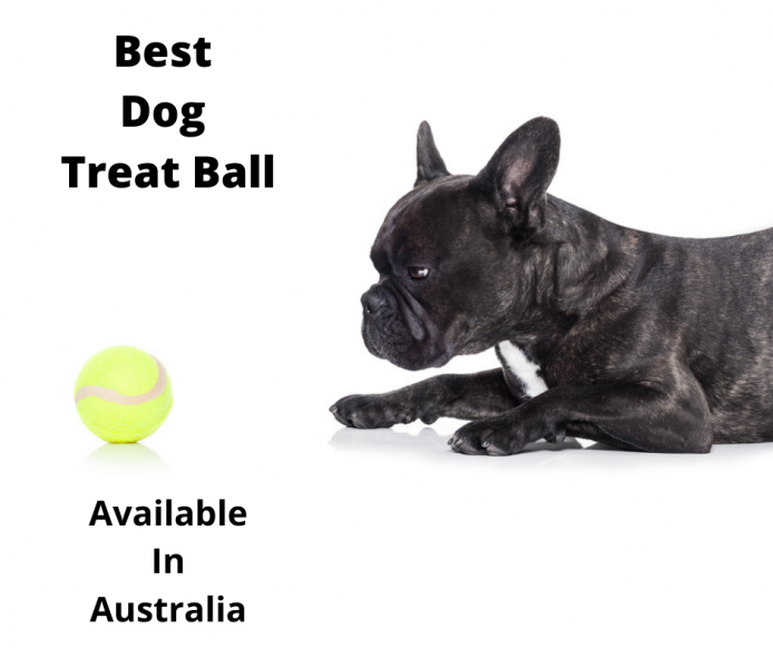French Bulldog bored with his tennis ball